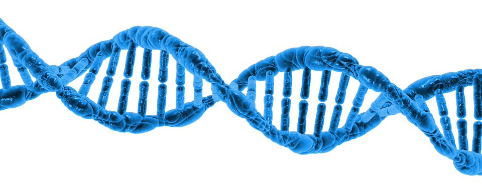 What Is A Genealogy DNA Test?