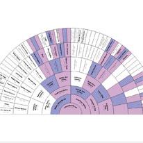 Legacy Family Tree - X-DNA Charts