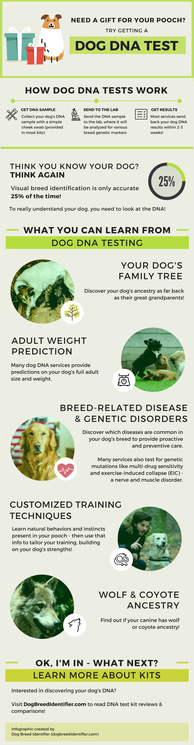 Dog Breed DNA Infographic