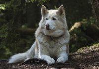 Dog DNA Breed Test