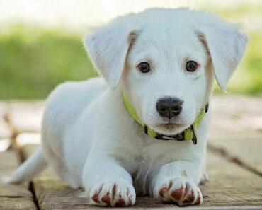 What You Need to Know About Pet Genealogy